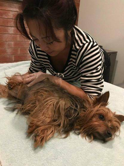 Dog massage, arthritis in dogs